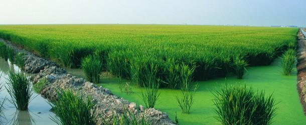 Ebro Foods: líder mundial del imperio arrocero
