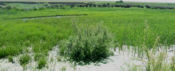 La Junta garantiza que su decisión sobre gasoducto de Doñana cumplirá la ley