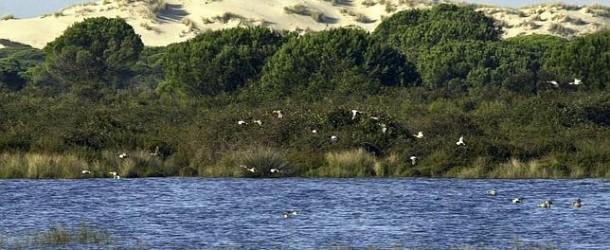 Informes científicos determinarán la viabilidad del gasoducto de Doñana