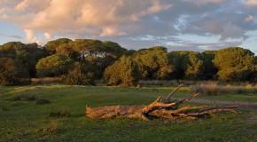 Luz verde para el Gasoducto de Doñana